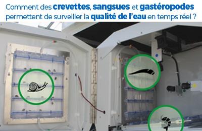 Comment des crevettes, sangsues et gastéropodes permettent de surveiller la qualité de l'eau en temps réel